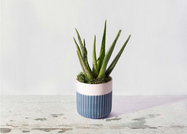 The Best Places to Shop For Plants Online | Hunker