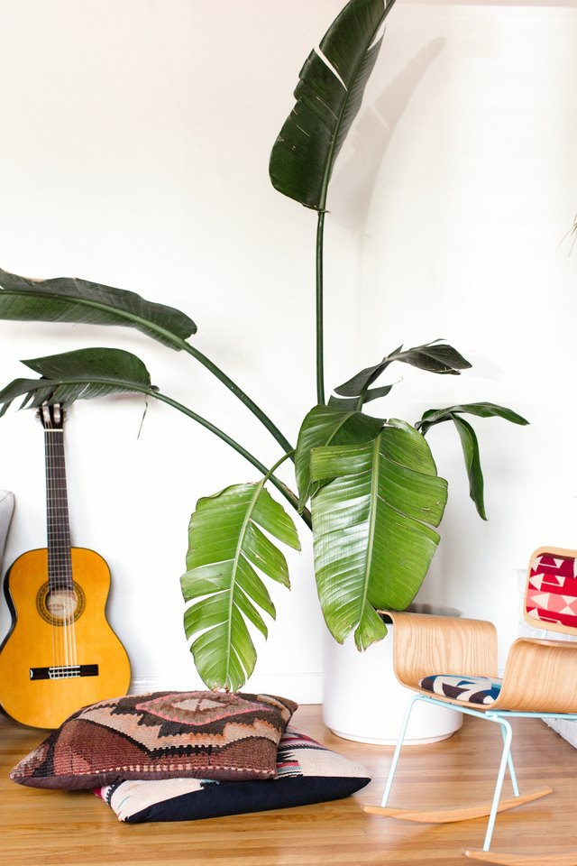 Plant help to clean and cool the air in your home.