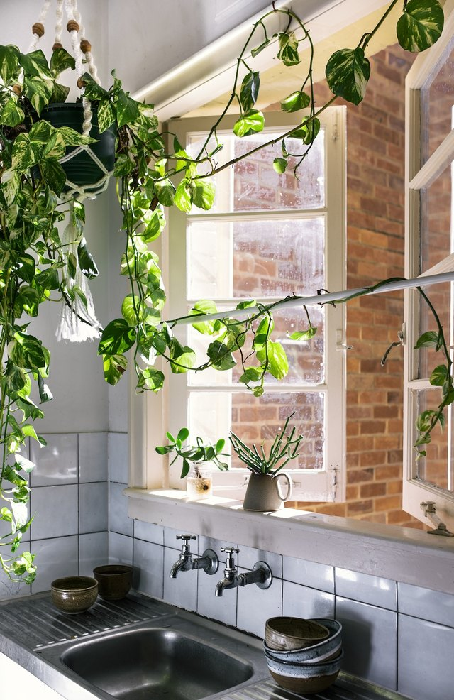 Bohemian Kitchen Sink With Macrame Plant Hanger Near Open Window