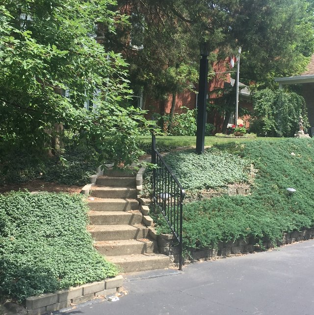 Ground cover on sloped yard.