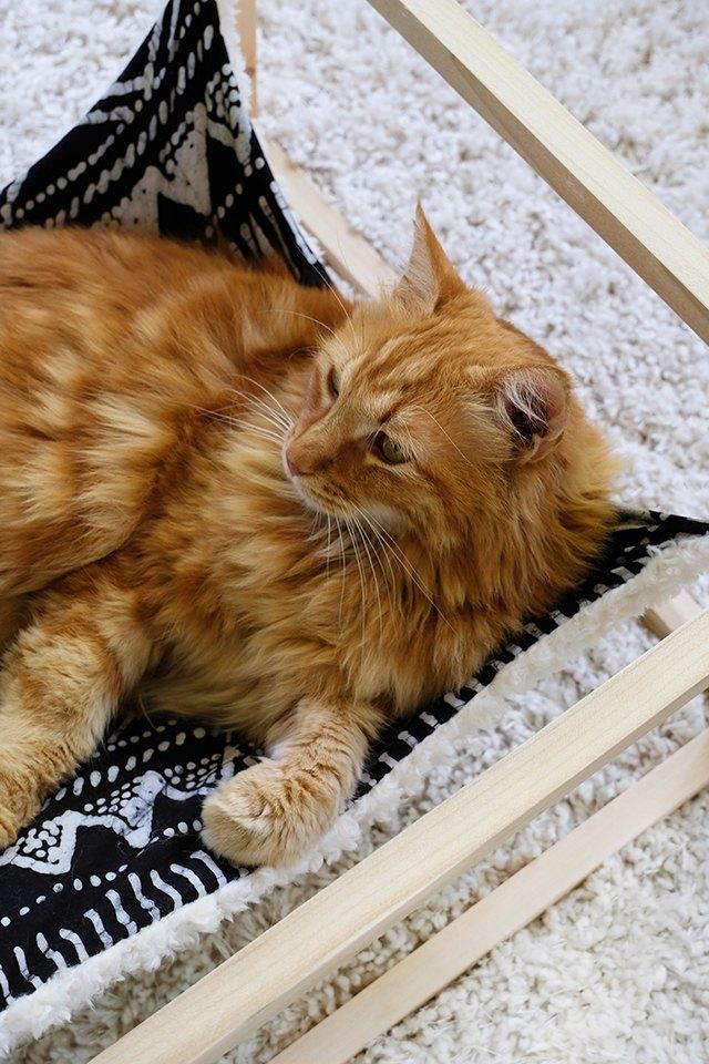 Cat Napping in DIY Cat Hammock