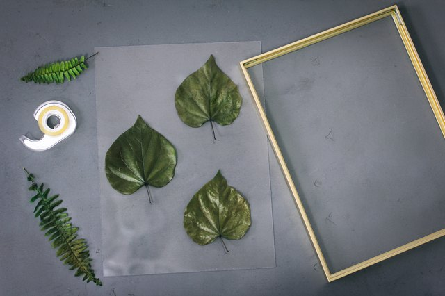Taping preserved leaves to floating frame backing