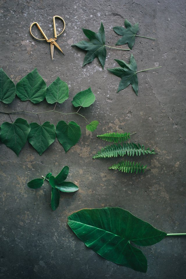 Assorted green leaves