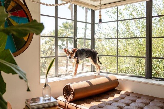 Dog on window ledge in living room