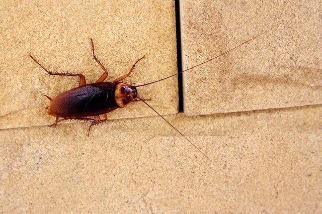 How To Get Rid of Roaches | Hunker