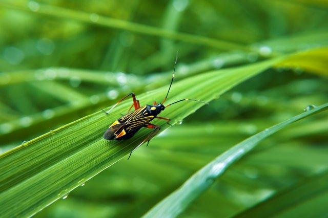 Colorfull bug at green grass