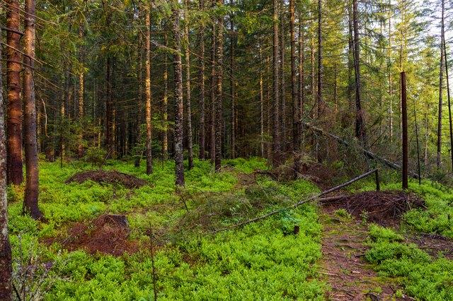 Landscape of spring forest