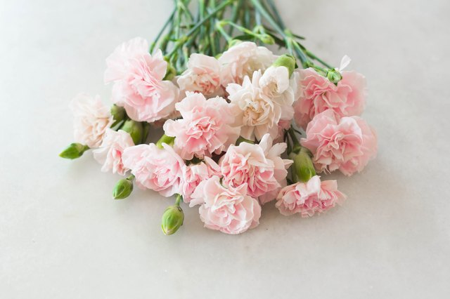 Meaning of carnation colors hunker pink carnation gilly flower bouquet mightylinksfo