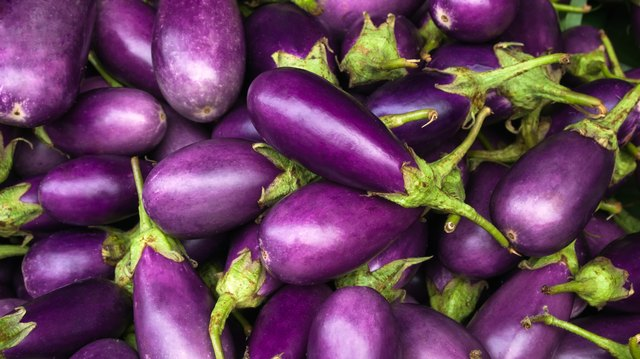 Close-up of several purple eggplants