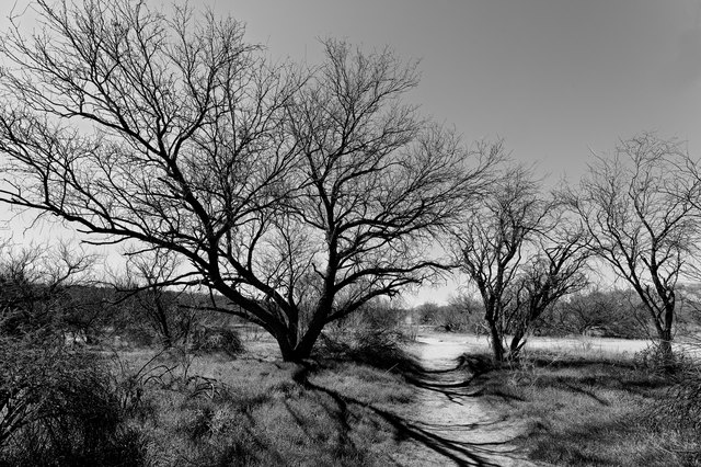 Mesquite Footpath