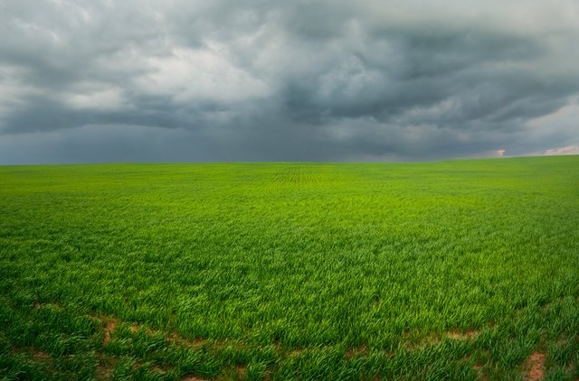 field with a bright green grass under the sky with large dark storm clouds