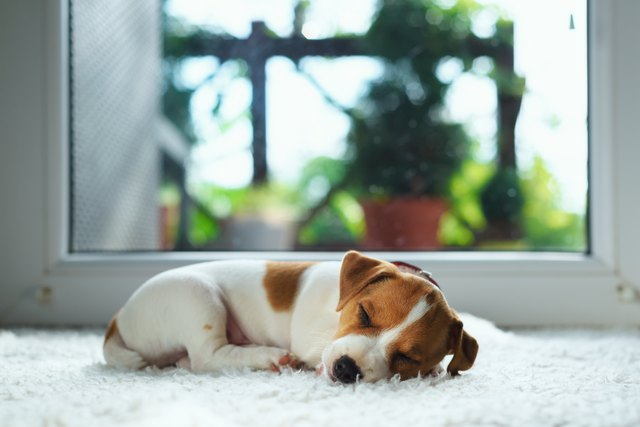 How To Get Pet Urine Amp Smells Out Of A Carpet With A