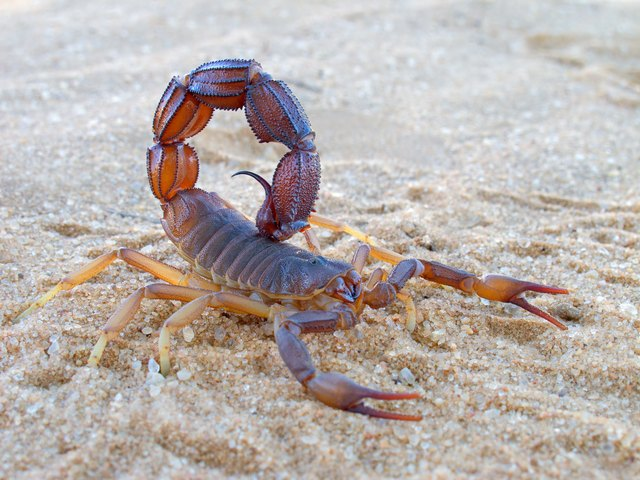 How To Get Rid Of Scorpions | Hunker
