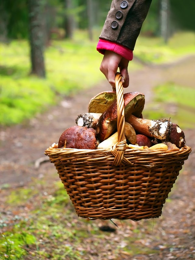 A hand holds a basket filled with mushrooms