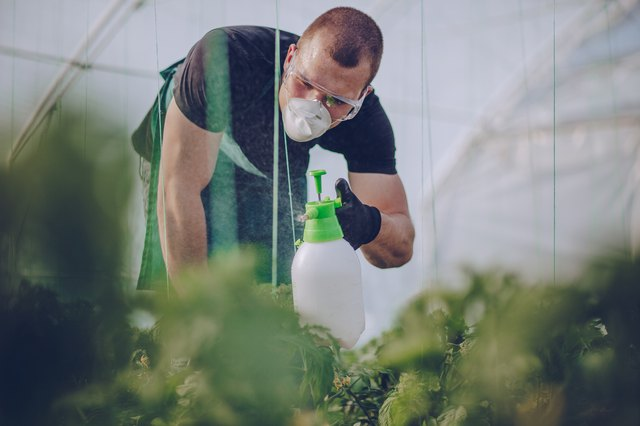 Spraying plants on farm