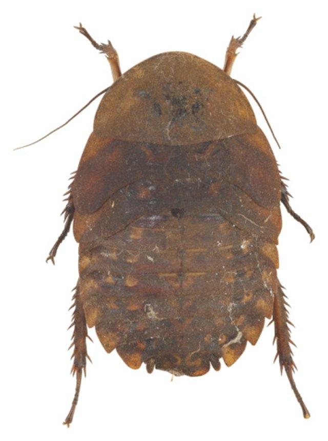 Small Bugs Near Water in a Bathroom | Hunker