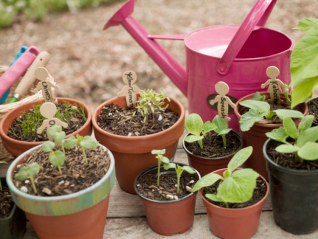 How to Keep Birds From Digging Up the Flower Pots on My Deck | Hunker