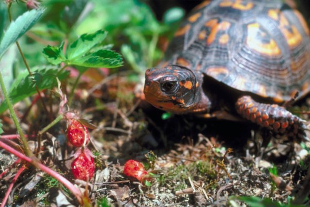 Plants That Are Poisonous To Box Turtles Hunker
