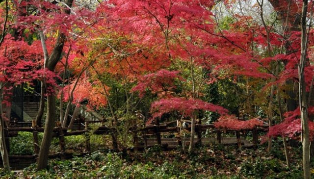 How to Root a Cutting From a Japanese Maple | Hunker