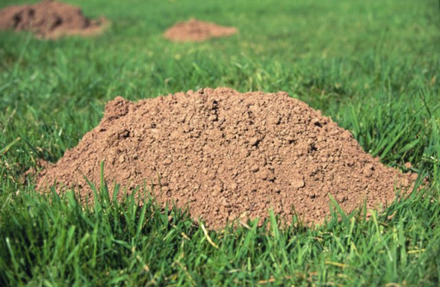 How to Naturally Deter Mice, Rats & Moles   Hunker