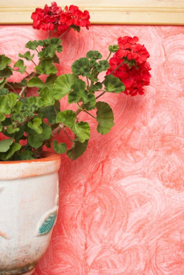 Geraniums As Insect Repellent | Hunker