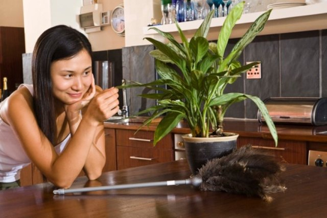 Indoor Plants That Reduce Dust | Hunker