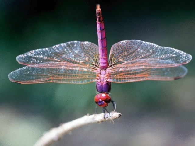 How to Attract Dragonflies & Ladybugs | Hunker