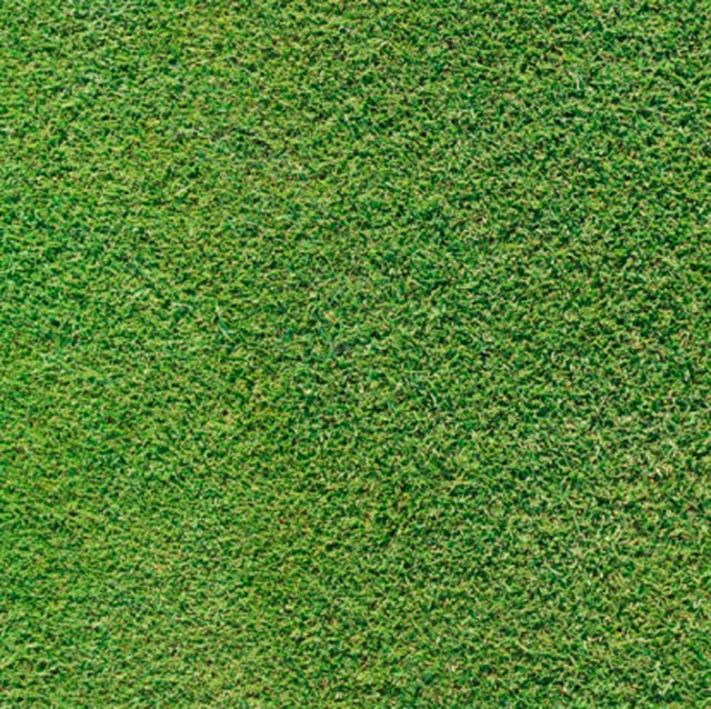 The Best Grass Seed for Florida | Hunker