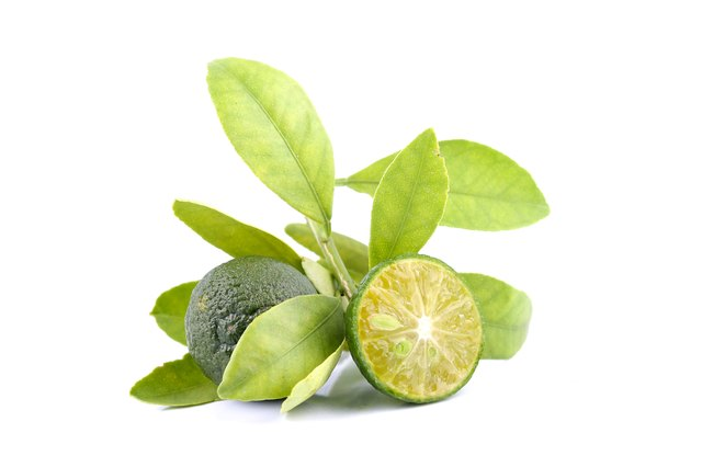 Group of green calamondin and leaf isolated on white background