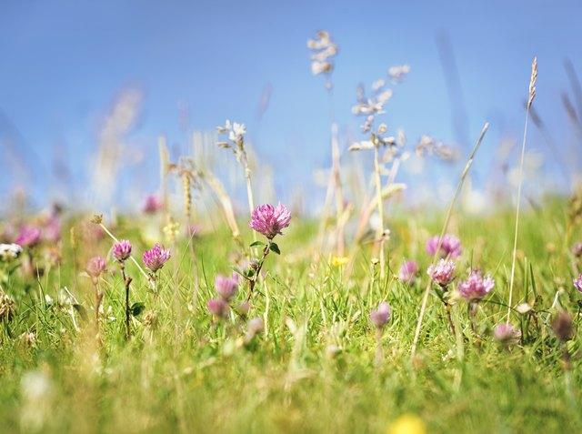 Fresh Wild Summer Meadow