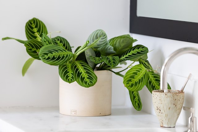 The best houseplant to buy each month of the year