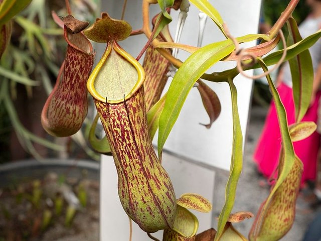 Best Houseplant to Buy in October | Hunker