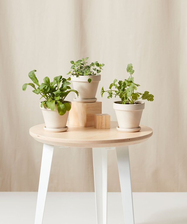 Bloomscape's New Line of Edible Gardens Is the Perfect Kitchen Accessory | Hunker