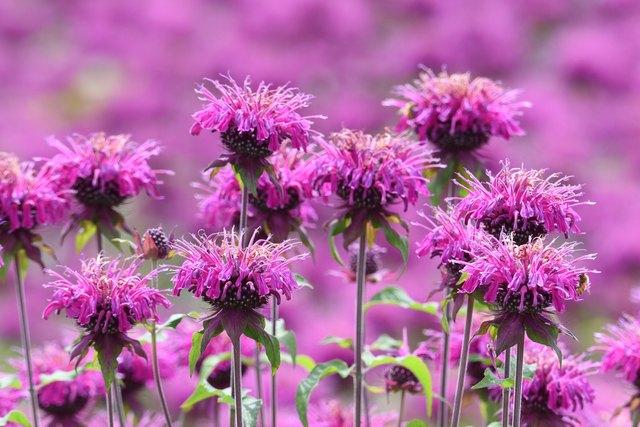 Garden & Herbs  cover image
