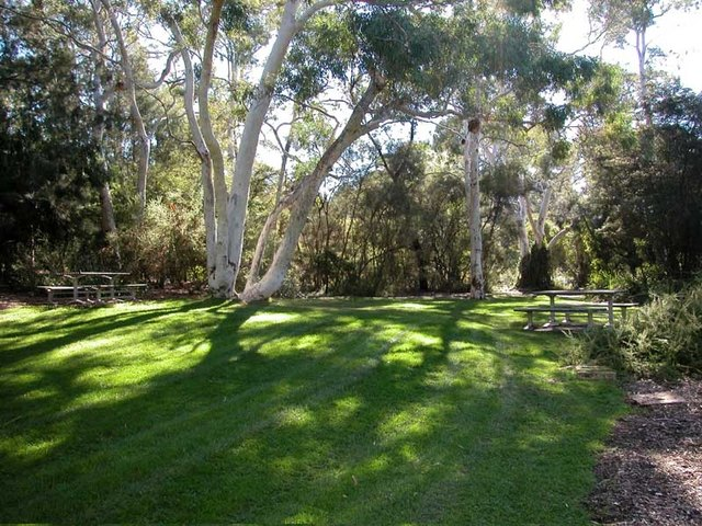 How to Grow Grass in a Wooded Lot