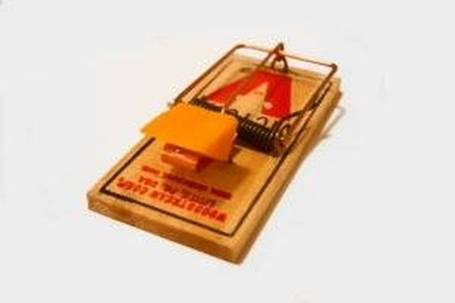 How Does a Mouse Trap Work? | Hunker