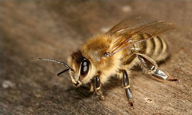 How to Kill Sand Bees | Hunker