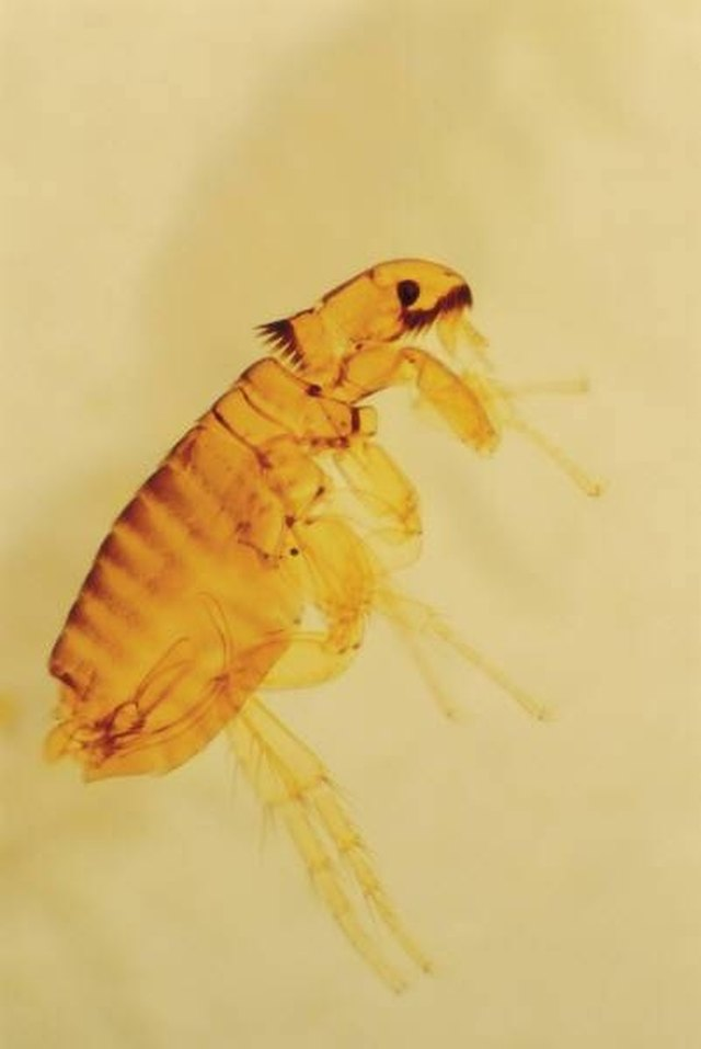 Do Bed Bugs Die In Laundry