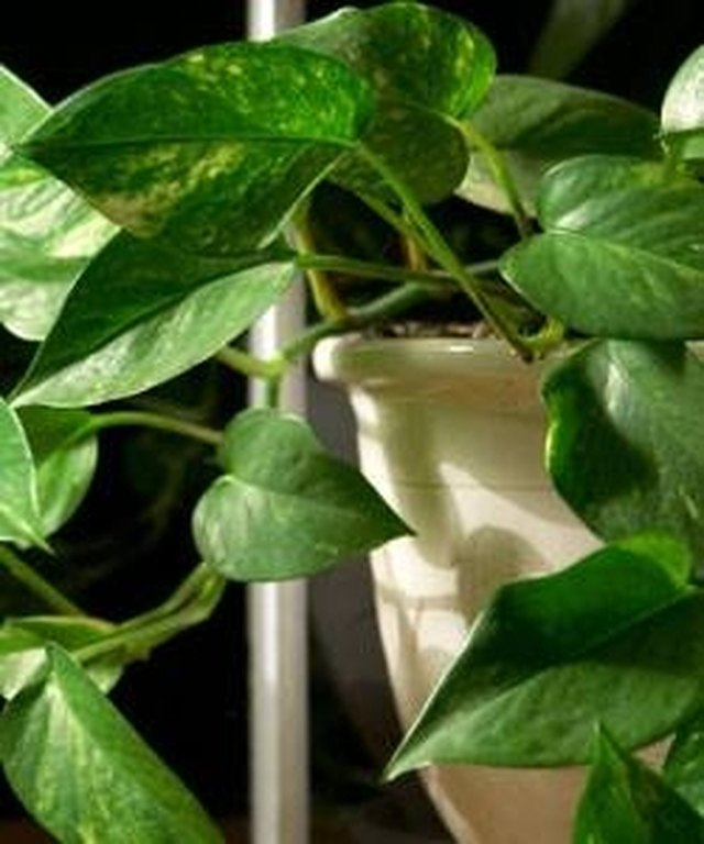 How to Identify Green House Plants | Hunker