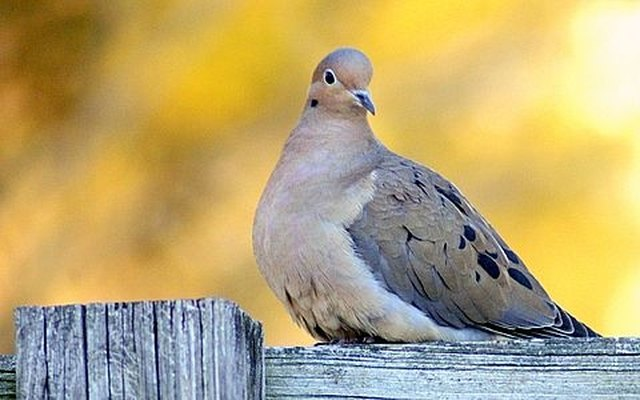 How to Prevent Birds From Perching on Your Wooden Fence | Hunker
