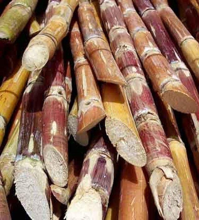 What is Sugar Cane? | Hunker