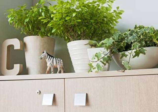 Plants For An Office Cubicle And Fluorescent Light Hunker