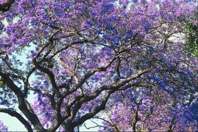 Trees With Purple Bell-Shaped Flowers | Hunker