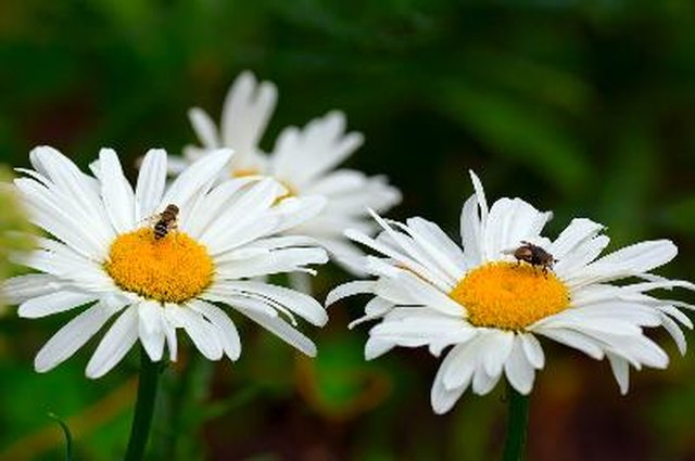 Why Are There Flies All Over My Flowers? | Hunker