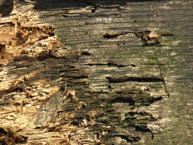 Termite Damage vs. Wood Rot | Hunker