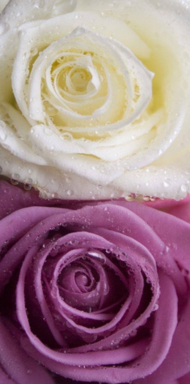 How to preserve flowers in epoxy resin hunker step 1 izmirmasajfo