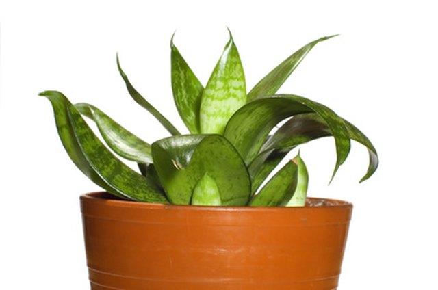 Uses of Ornamental Plants | Hunker