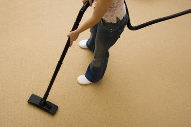 How To Identify Carpet Bugs Amp Maggots Hunker