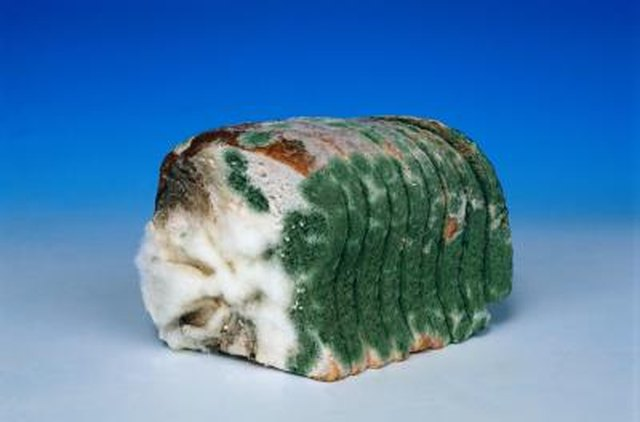 Can Mold From Bread Kill You Hunker