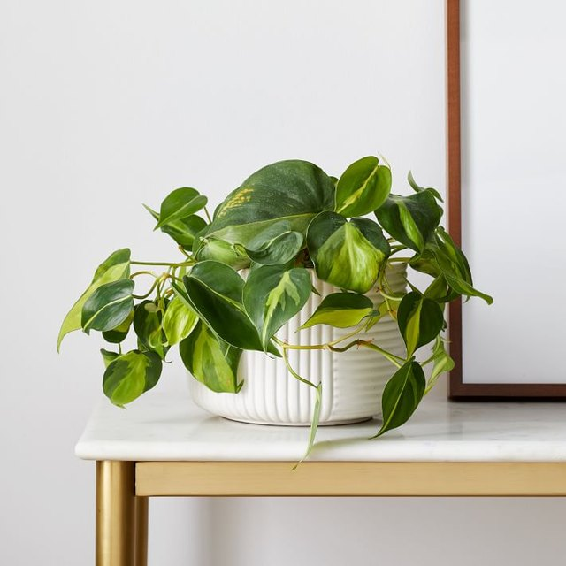 Oddly, These 9 Plants Thrive on Neglect | Hunker